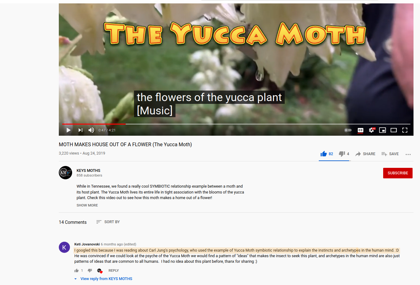 """Screenshot of a YouTube video about yucca moths. In the comments someone posted, """"I googled this because I was reading about Carl Jung's psychology, who used the example of Yucca Moth symbiotic relationship to explain the instincts and archetypes in the human mind. :D"""""""